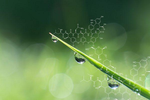 La Genetica Vegetale da Mendel, Strampelli e Borlaug alle Scienze Omiche, passando dagli OGM, per un'Agricoltura Innovativa